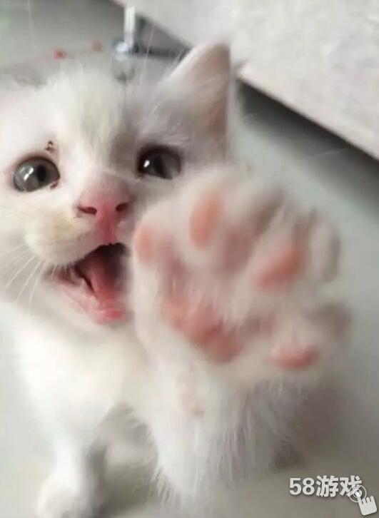 58game 萌宠物语 > 萌萌哒猫爪爪,可爱猫爪肉垫大集合